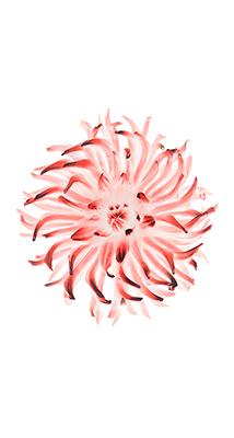 Fondo-Pantalla-iPhone-6-flor-roja-min